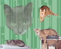 Tribute Wallpaper,Cat,Kat,Spot,Star Trek,Spot of Borg