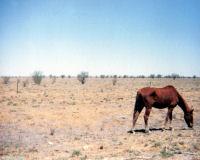Aussie Outback Wallpaper,Australia,landscape,Outback,Spot of Borg