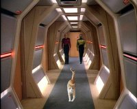 Spot Wallpaper,Cat,Kat,Spot,Star Trek,Spot of Borg